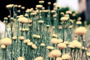 weed photo
